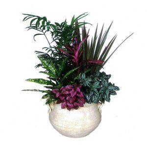 Σύνθεση Φυτών με Μωβ Λεπτομέρεια