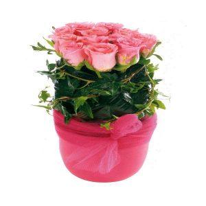 Γκρουπαριστά Ροζ Τριαντάφυλλα