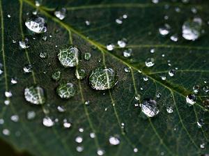 Η σημασία του νερού στα φυτά