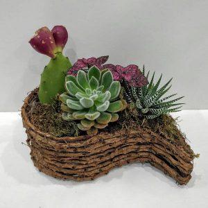 Ιδιαίτερη Σύνθεση Φυτών