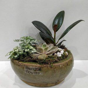 Σύνθεση Φυτών σε Οβάλ Κασπώ