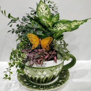 Σύνθεση Φυτών σε Μεγάλη Κούπα Τσαγιού