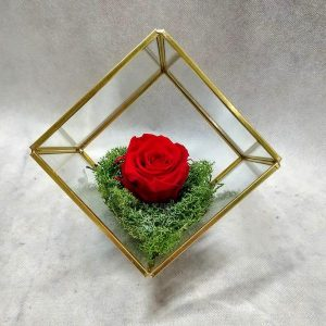The Baby – Terrarium – Κύβος
